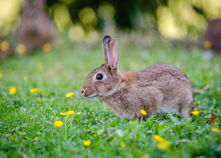 ウサギの画像 p1_33