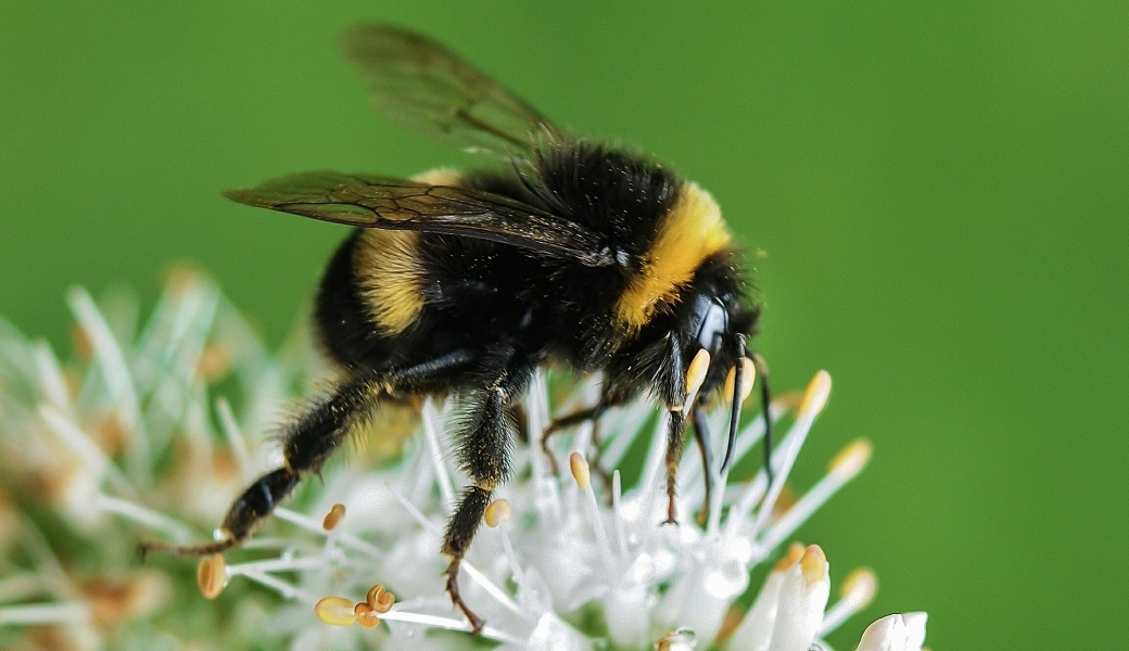 ミツバチの画像 p1_28