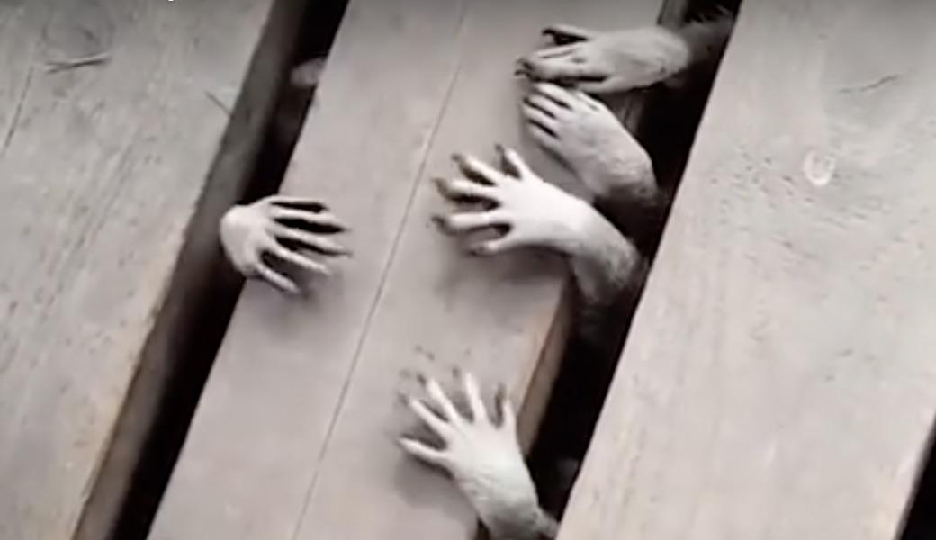 猫 ゾンビ 映画