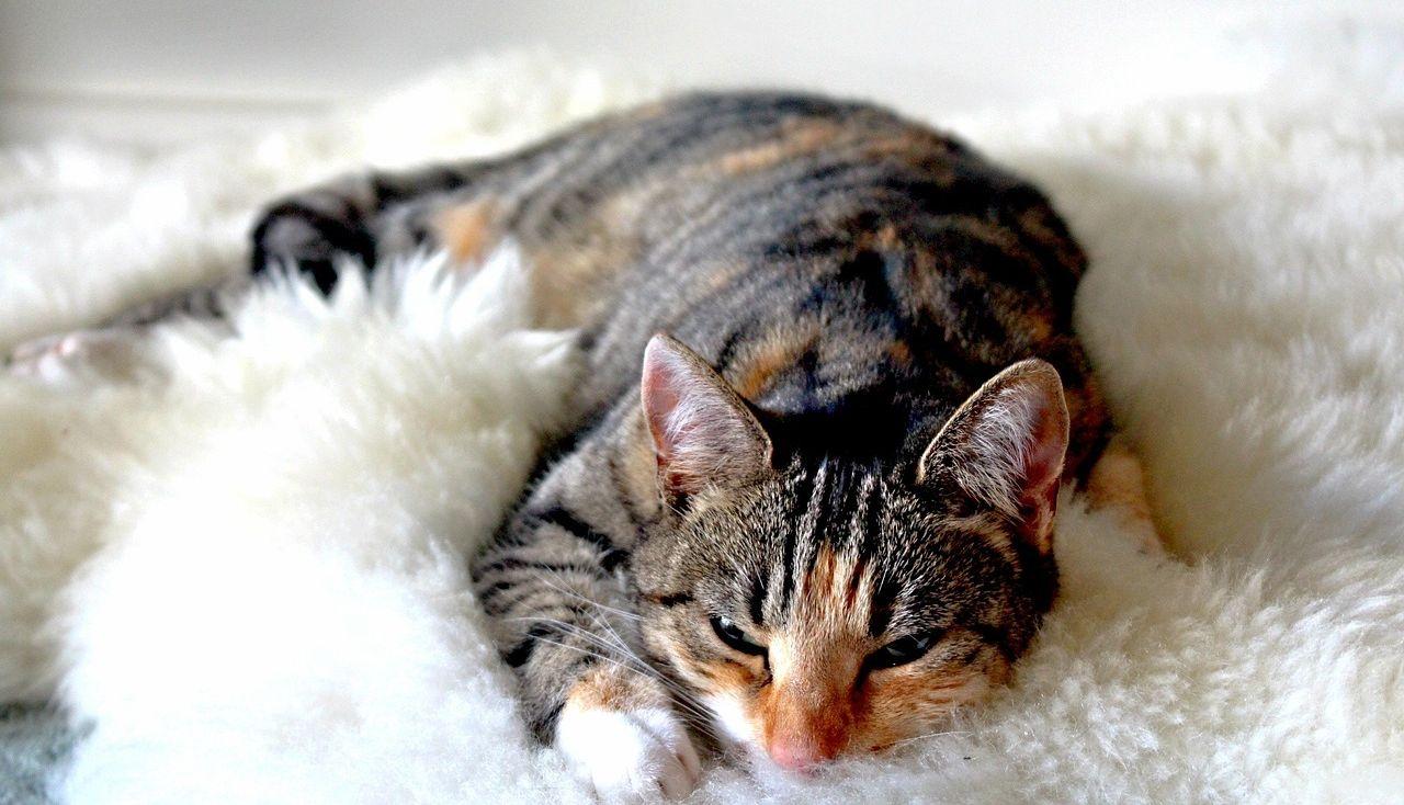 おいしそうな脚の女子校生 252脚目猫ガイジ隔離スレ [無断転載禁止]©bbspink.com->画像>2940枚