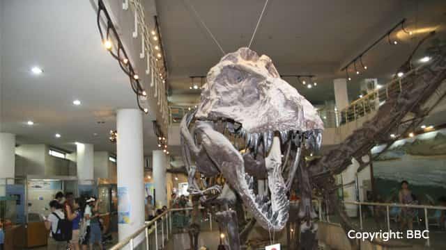 化石ワンダーランド