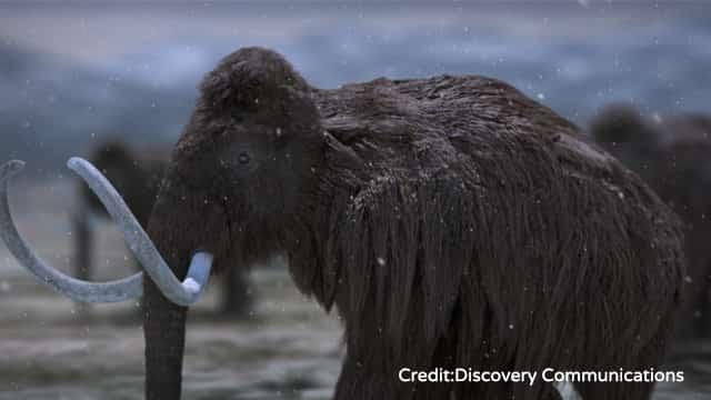 蘇れ!氷河期の生き物たち
